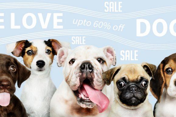 אביזרים ומוצרים לחיות מחמד – We Love Pet